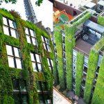 Beneficios de los muros vegetales en las ciudades